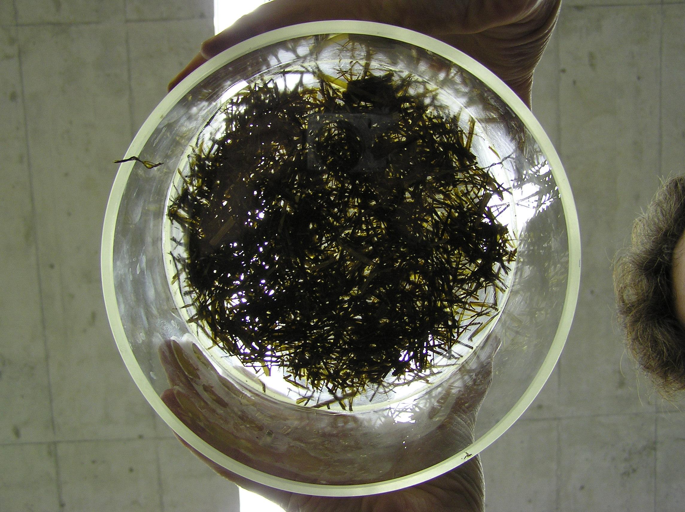 Farberfassung zur Bestimmung der Grashäcksellänge und des Anteils der gecrackten Maiskörner